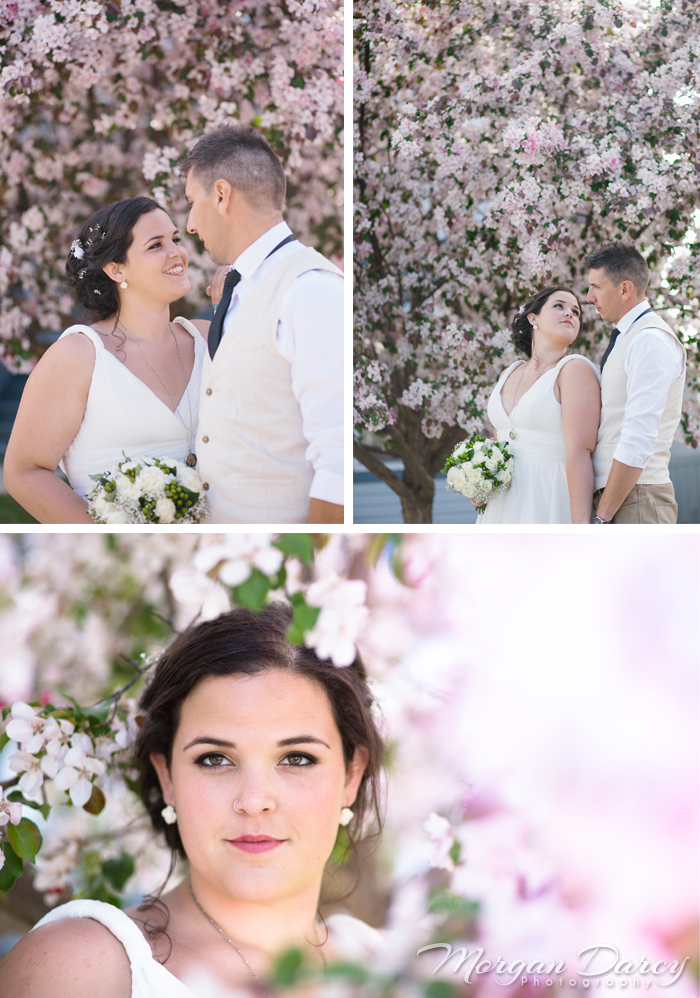 Alberta Wedding Photographer photography photographers romanian wedding farm wedding bride groom portraits cherry blossoms