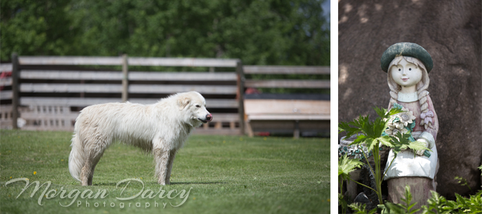 Alberta Wedding Photographer photography photographers romanian wedding farm wedding