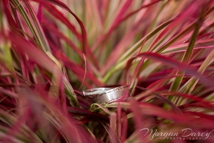 edmonton wedding photographer photography photographers ring shot